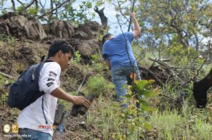 Reforestación en zona de La Montañona, Chalatenango